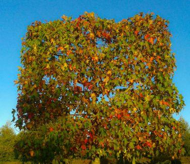 Weiterlesen: Spalierbäume