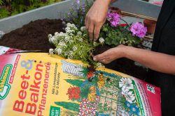 Beet und Balkonpflanzenerde
